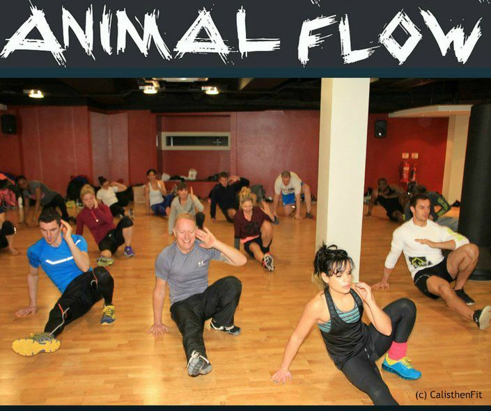 Animal Flow Dublin