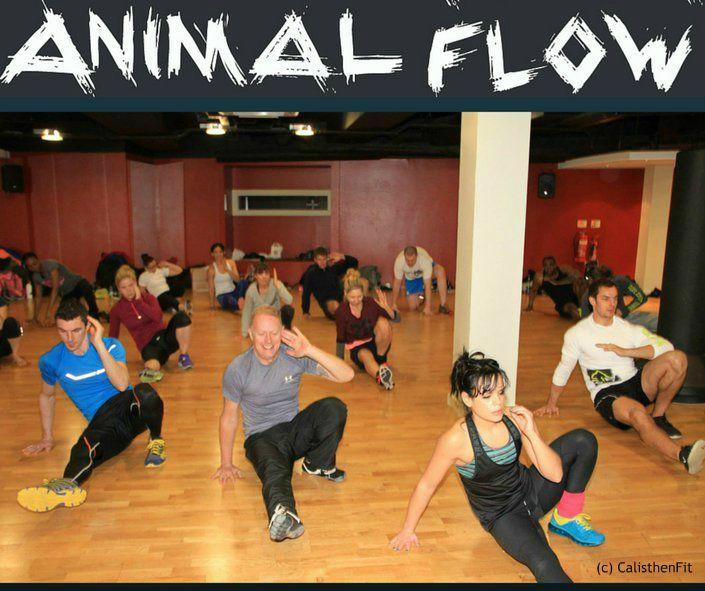 Animal Flow Dublin